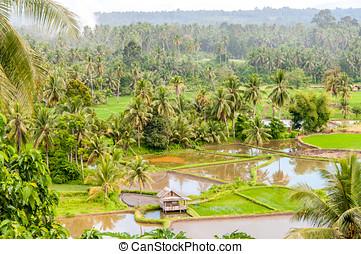 Sumatra Countryside