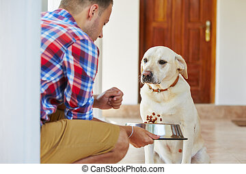 Hungry dog - Hungry labrador retriever is waiting for...