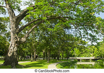 Big green tree in Botanical garden