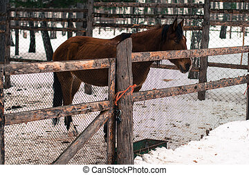 Horse in winter forest - harnessed horse in winter forest