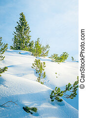 snow and trees - An image of snow and some trees