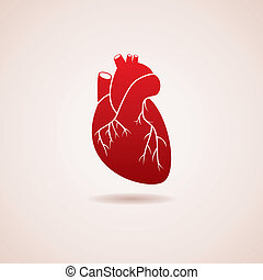 vector  human heart icon - vector red human heart icon