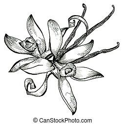fleur, croquis, Bouquet