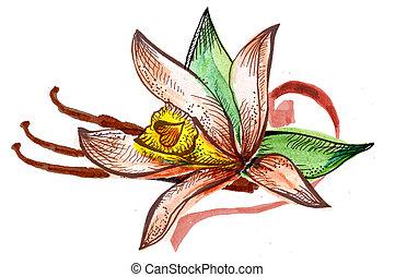 aquarelle,  Bouquet, croquis, fleur