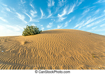 Arid Land - Desert landscape with a dry tree branch and...