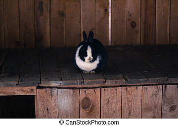 Cute rabbit in a hutch