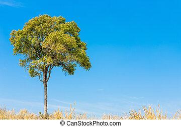 verão, capim, árvore, céu, paisagem
