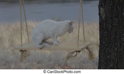 White cat outdoors