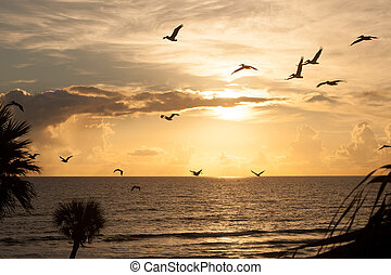 Pelican Silhouettes at Sunset - Silhouettes at sunset over...