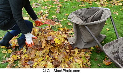 woman load barrow leaves - woman hands gloves load colorful...