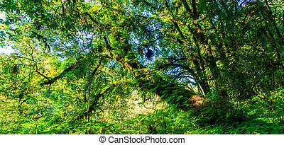 Green forest in primeval forest and big trees nature