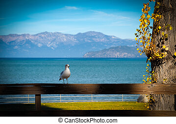 Seagull on a fence - Seagull perching on a wooden fence,...
