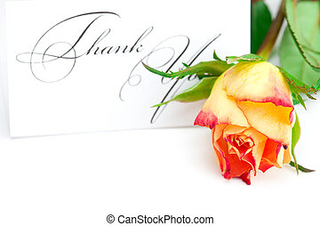 yellow red rose and a card with the words thank you isolated...