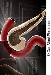 Pancreas - Digital illustration of pancreas in colour...