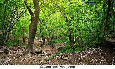 In deep forest - Deep forest. Composition of nature.