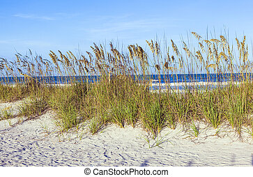 grass at the beach on dune