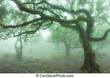 Fairy tree - Laurel Forest in Madeira, Portugal