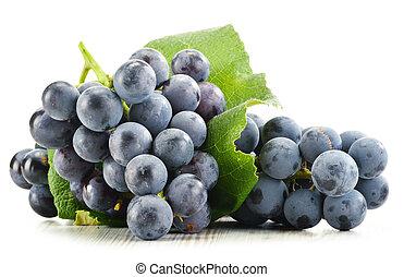 ramo, fresco, rojo, uvas, aislado, blanco