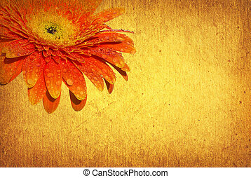 gerbera - vintage floral background