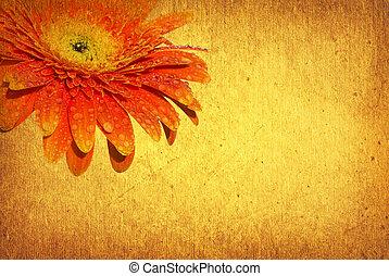 gerbera - vintage floral background