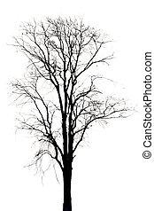 Silhouette of dead tree.