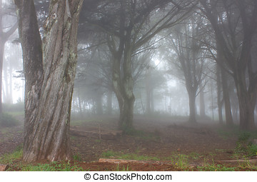 Mystery Forest - Forest in Mountain Range in misty weather...