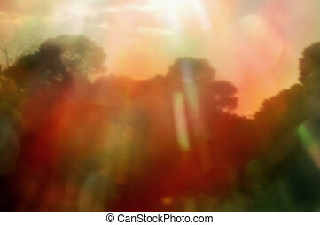 forest trees sun reflection - Forest trees and sun...