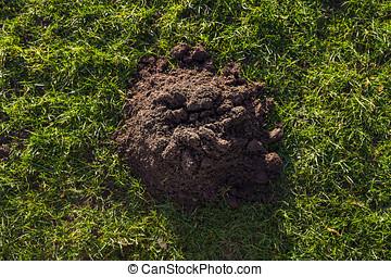 Molehill in a lawn in a park In Kirkby-In-Ashfield,...