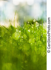 green grass with dew in the sunlight - green fresh grass...