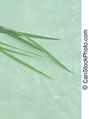 lily leaves on fern background - fortnightly lily leaves...