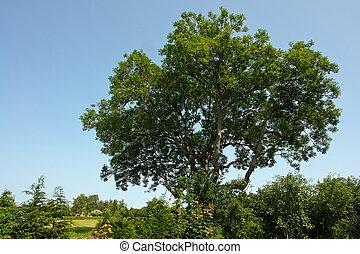 Beautiful green tree - Beautifu lush green tree in a...