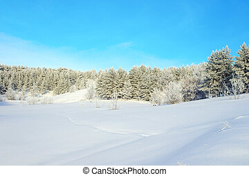 Winter landscape with pines