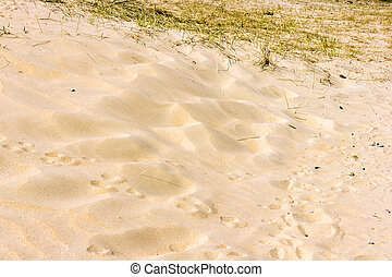Sand background, National Park Zuid Kennemerland, The...