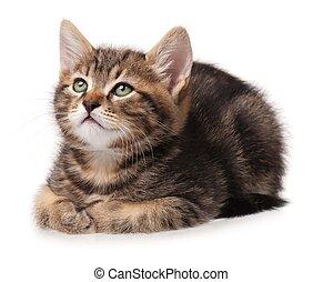 Cute kitten - Cute little lying kitten over white background...