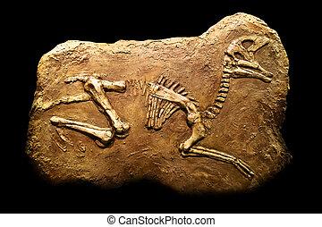 Hadrosaurus Fossil - Skeleton of Hadrosaurus in stone on a...