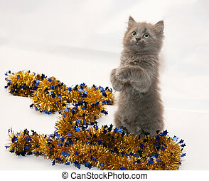 Fluffy gray kitten playing with golden Christmas garland on...