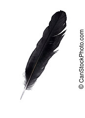 Black feather - Big black bird feather isolated on white...