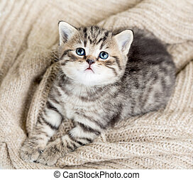 top view of baby cat kitten lying on jersey