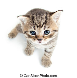 top view of baby cat kitten on white background