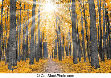 nature forest in autumn - nature forest with yellow leaves...