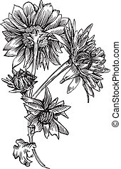 Chrysanthemum is hand drawn and live traced Fills and...