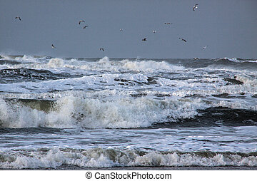 Waves at the beach Strmischer Wind und hohe Wellen