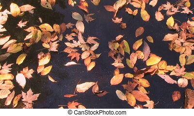 Drifting Leaves Time Lapse - Time lapse of autumn leaves...