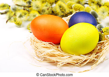 Easter eggs in birds nest with brunch of goat-willow tree