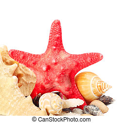 Sea star - Decorative red sea star with different shells on...