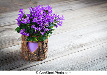 blue campanula flowers for Valentine's Day on wooden...