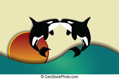 Orca love - Orcinus orca, Killer whale jumping and kissing...