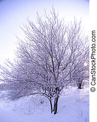 Bare Frozen Tree in Snowy Winter Field under Blue Sky - Bare...