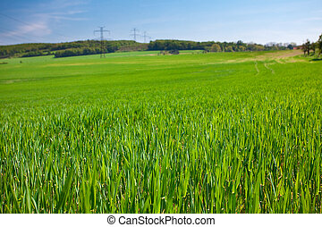 blauwe, Hemel, sterke drank, tegen, groene, gras