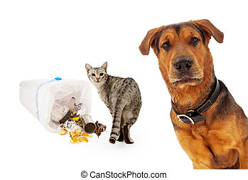 Guilty cat with innocent dog - A closeup of an adult large...